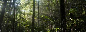 Save the planet - amazon panorama