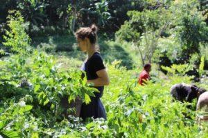 Usambara Biodiversity Conservation project in Tanzania No. 4