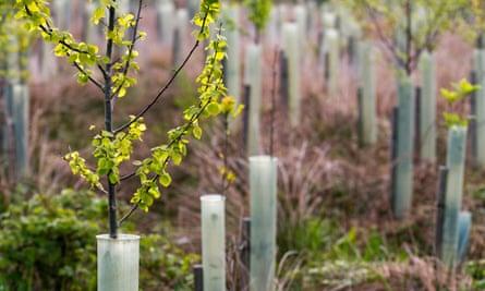 saplings growing in a plantation