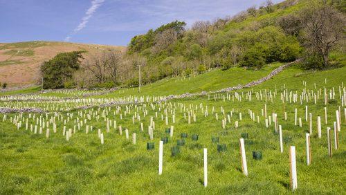 a field of saplings