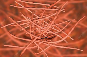 Actinomycetes image showing their beautiful filaments