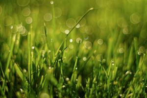 rain falling on grass in sunlight